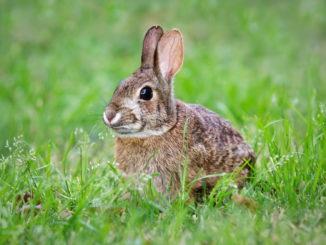 Bin ich dazu bereit, Kaninchen als Haustiere zu halten